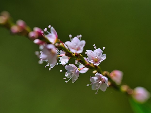 Photos: 春っぽく?