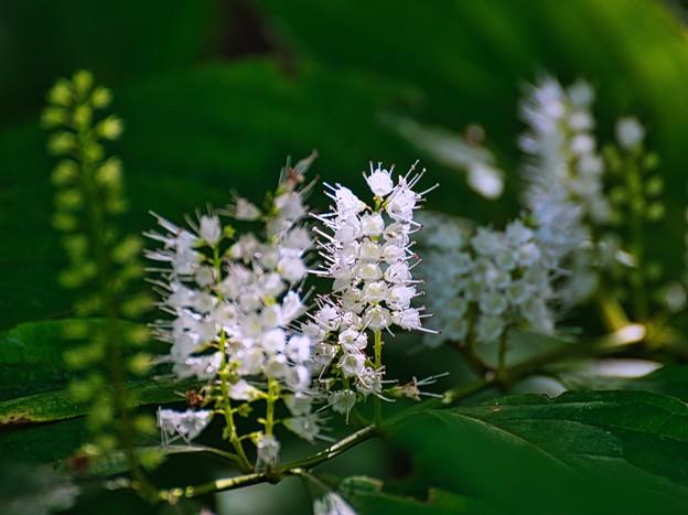 二度咲く花