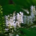 Photos: 二度咲く花