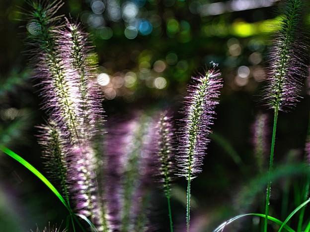 Photos: 光るブラシ