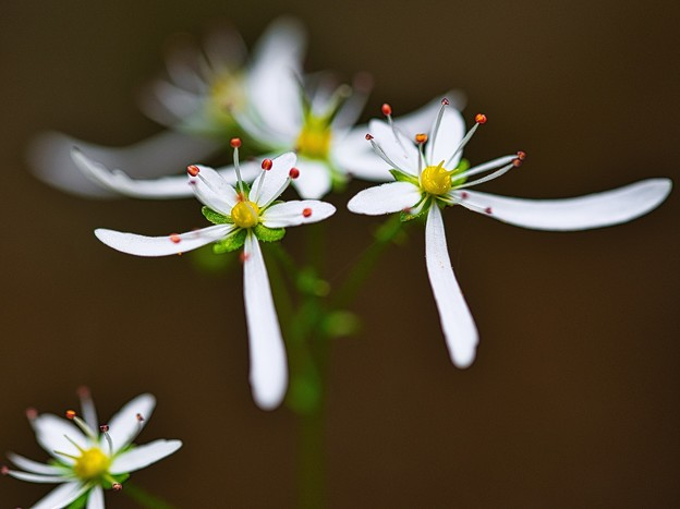 Photos: 流れに咲く