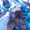 刺し網漁 (1)