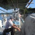 刺し網漁 (2)