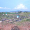 芋畑草刈り