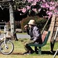 Photos: 花見老人