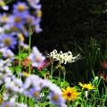 Photos: 荒地のお花畑