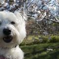 Photos: 桜 咲きました