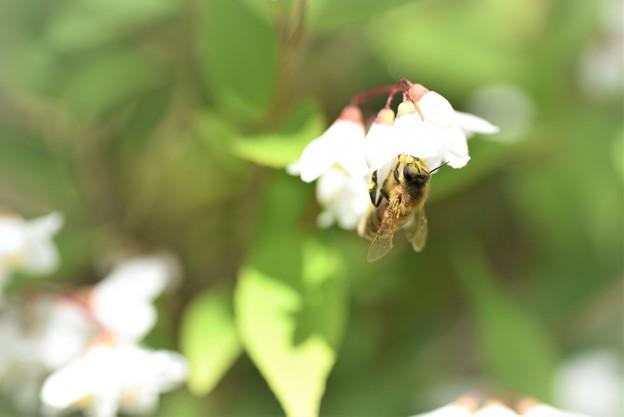 2021/04/22・・・庭の花No01