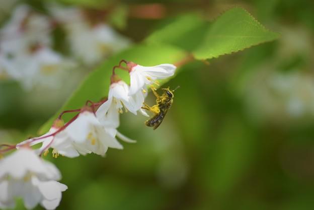 2021/04/22・・・庭の花No02