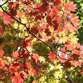Photos: 秋...初めようかなwww