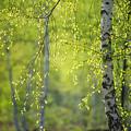 Photos: 春の名残