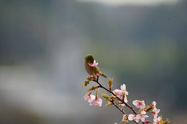 Photos: 季節の風景