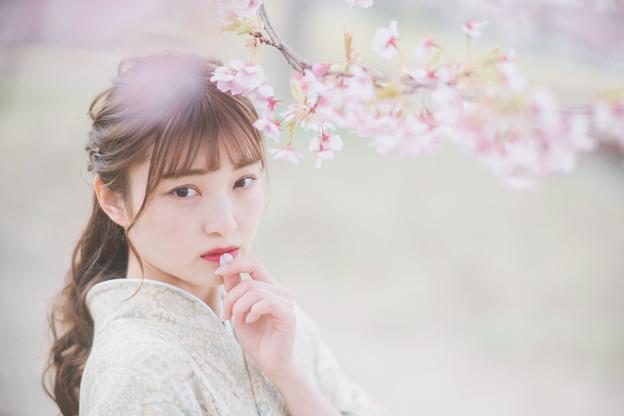 うちなびく桜花は春の日に
