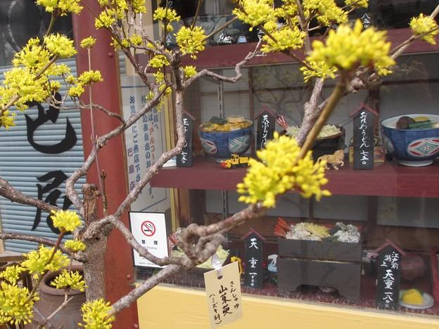 黄色い花@ともえや210226