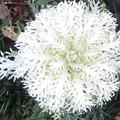 白い花@わ210306