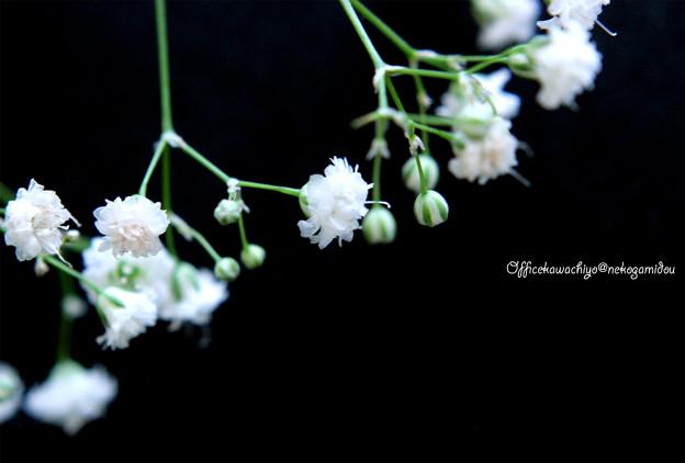 Blurred-grass