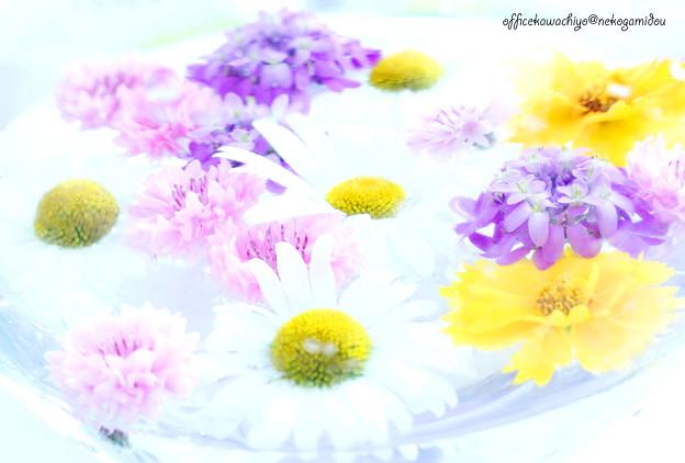 floweronthewater