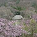 陣ケ丘から見た茅葺屋根の家