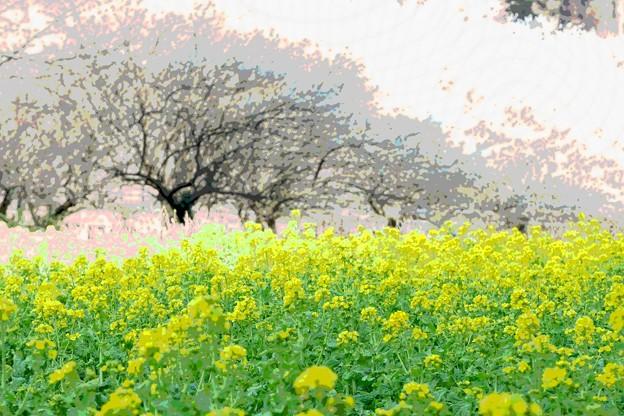 2021.03.01 追分市民の森 梅と菜の花