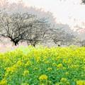 Photos: 2021.03.01 追分市民の森 梅と菜の花