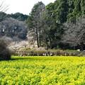 Photos: 2021.03.04 追分市民の森 ナノハナ