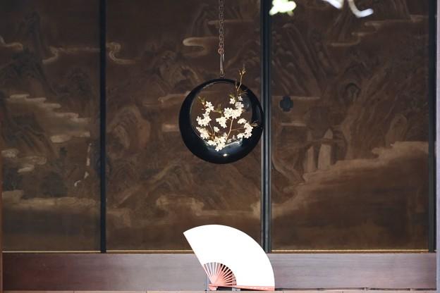 2021.03.20 円覚寺 お寺 玄関に桜