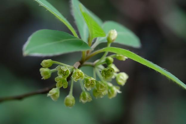 2021.04.02 追分市民の森 木に花 調査