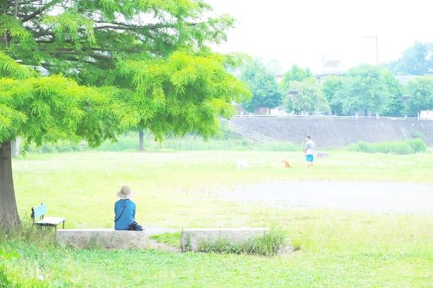 2021.06.15 和泉川 ベンチ
