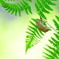 Photos: 2021.07.29 追分市民の森 風にゆれるシダに空蝉