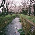 千本桜01