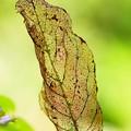 Photos: 木の葉