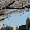 Photos: DSC_6069