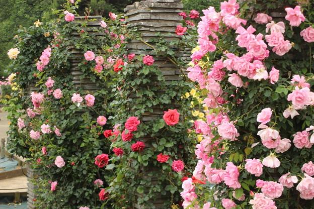 祝 ''母の日'' 百万本のバラ