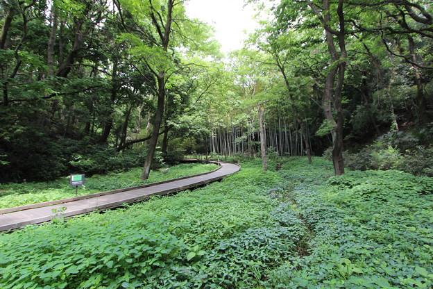 高根沢森林公園