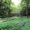 Photos: 高根沢森林公園