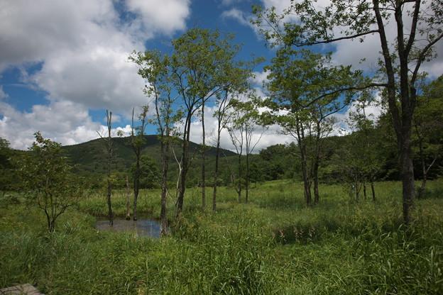 夏の霧ヶ谷湿原にて