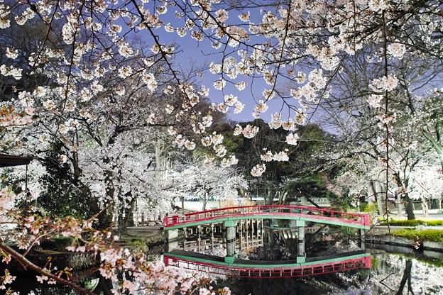夜桜2021