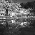 Photos: 夜桜2021(2)