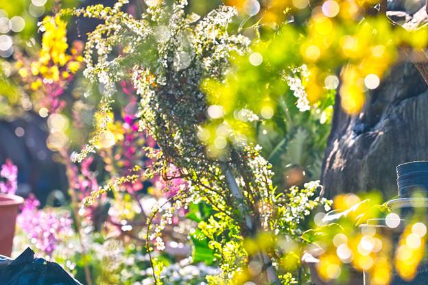 Photos: 我が家の春~(#^.^#)