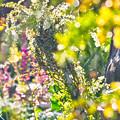我が家の春~(#^.^#)
