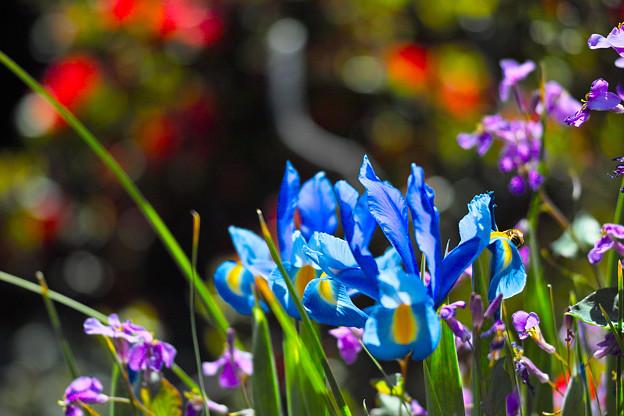 Photos: 庭先の春