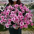 Photos: お母さんありがとう!(#^.^#)