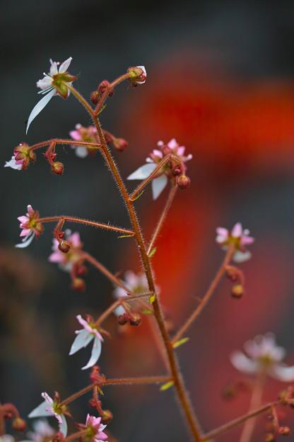 池の傍らに咲く