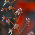 Photos: 池の傍らに咲く