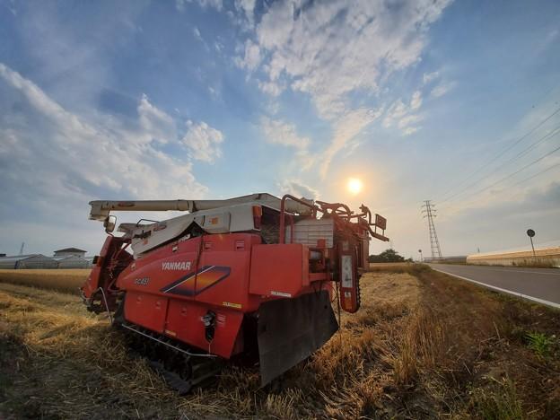 麦刈り開始