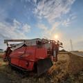 Photos: 麦刈り開始