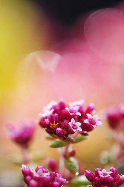 ちっちゃなお花