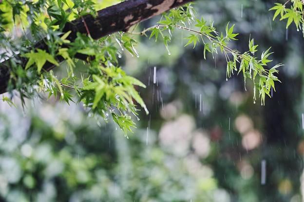 また雨ですね~(#^.^#)