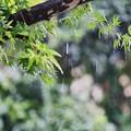 Photos: また雨ですね~(#^.^#)