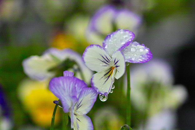 雨ですね~(#^.^#)